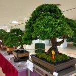 Persatuan Bonsai Sarawak, Association, Kuching, Malaysia, Tourism, tray planting, nature, hobby, Japanese art, penjing, penzai, event, exhibition, show, fossilized wood,