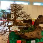 Persatuan Bonsai Sarawak, Association, Kuching, Malaysia, tray planting, nature, hobby, Japanese art, penjing, penzai, event, exhibition, show, 榕树, 水梅,