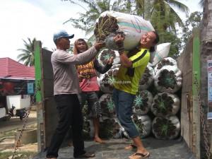 seaweed farming, adventure, traditional, destination, Borneo, Kalimantan Utara, Pulau, Suku Dayak Tidung, Nelayan, village, Obyek wisata, Tourism, travel guide, transborder, 北加里曼丹, 婆罗洲海草,