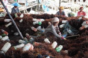 rumput laut, Tanjung Harapan, exploration, traditional, authentic, Borneo, North Kalimantan, red algae, Suku Dayak Tidung, village, Obyek wisata, Tourism, travel guide, crossborder, 北加里曼丹, 婆罗洲旅游景点