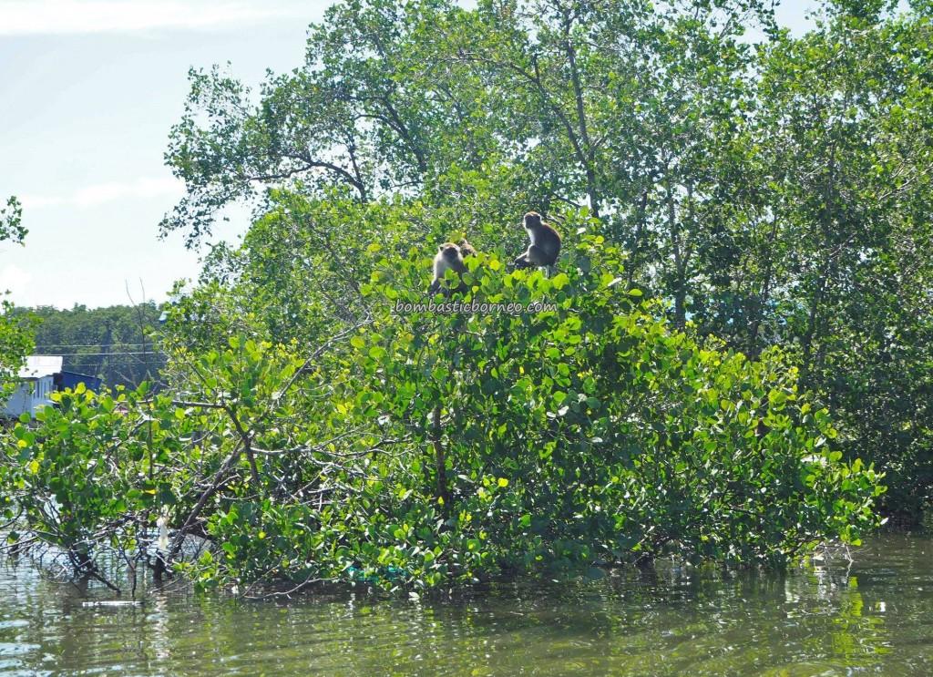 fishing village, floating house, wildlife, authentic, backpackers, destination, Borneo, Malaysia, Sarawak, nelayan, Tourism, travel guide, crossborder, 砂拉越婆罗洲