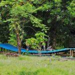 Bucephalandra, authentic, backpackers, destination, Suka Maju, Putussibau Selatan, Indonesia, West Kalimantan, Kampung Melayu, Sungai Kapuas, native, Tourism, tourist attraction, transborder,
