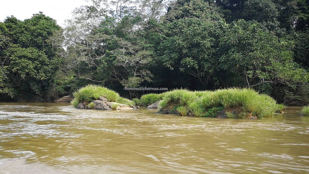 Longboat ride, River, adventure, nature, outdoor, backpackers, destination, Borneo, Desa Beringin Jaya, village, Tourism, tourist attraction, travel guide, Transborneo, 印尼西加里曼丹