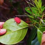Island, Taman Negara Bako, National Park, adventure, outdoor, jungle trekking, rainforest, Kuching, tourist attraction, travel guide, transborneo, 砂拉越马来西亚, 婆罗洲巴哥国家公园
