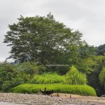 boat ride, Hovongan River, adventure, nature, outdoor, backpackers, Borneo, Kapuas Hulu, Putussibau Selatan, Obyek wisata, travel guide, crossborder, 印尼卡江, 婆羅洲西加里曼丹