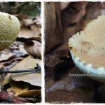 fungi, waterfall, Kumpang Langgir, nature, exploration, hiking, destination, Borneo, Sri Aman, Tourism, travel guide, transborder, 砂拉越婆罗洲, 马来西亚蘑菇, mushroom,