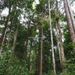 Gua Maria Santok, adventure, destination, Indonesia, backpackers, Kalimantan Barat, Sajingan Besar, Desa Santaban, Dusun Sasak, Obyek wisata, Tourism, travel guide, crossborder,