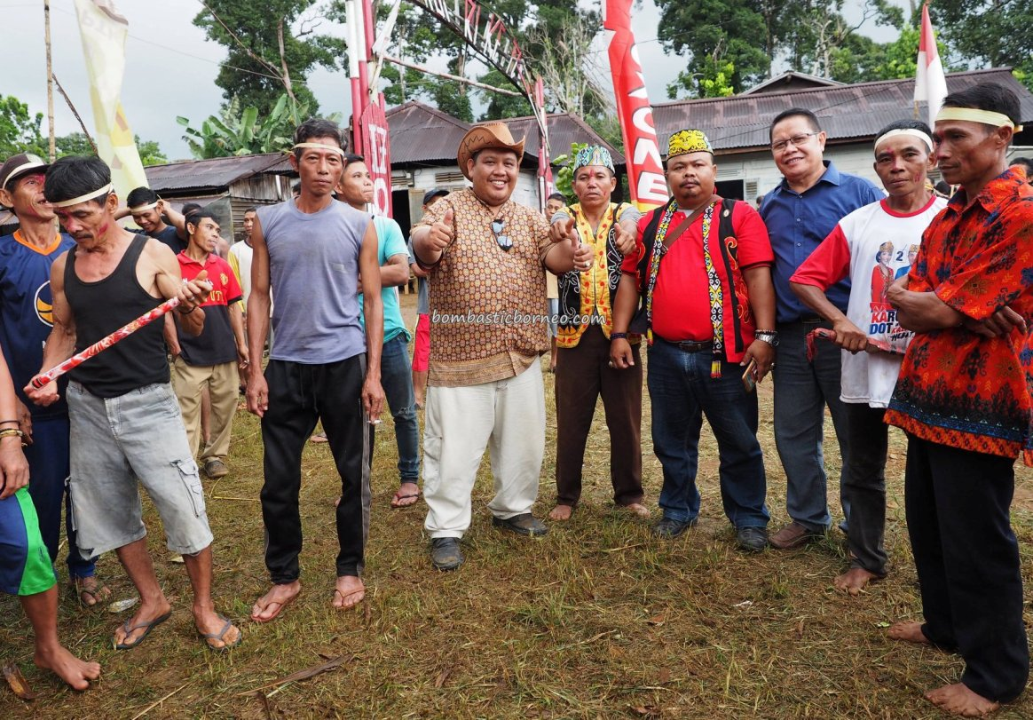 paddy harvest festival, authentic village, culture, event, skull feeding, backpackers, Bengkayang, Borneo, Tujuh Belas, Sanggau Ledo, tribe, native, Tourism, travel guide, crossborder, wisata budaya