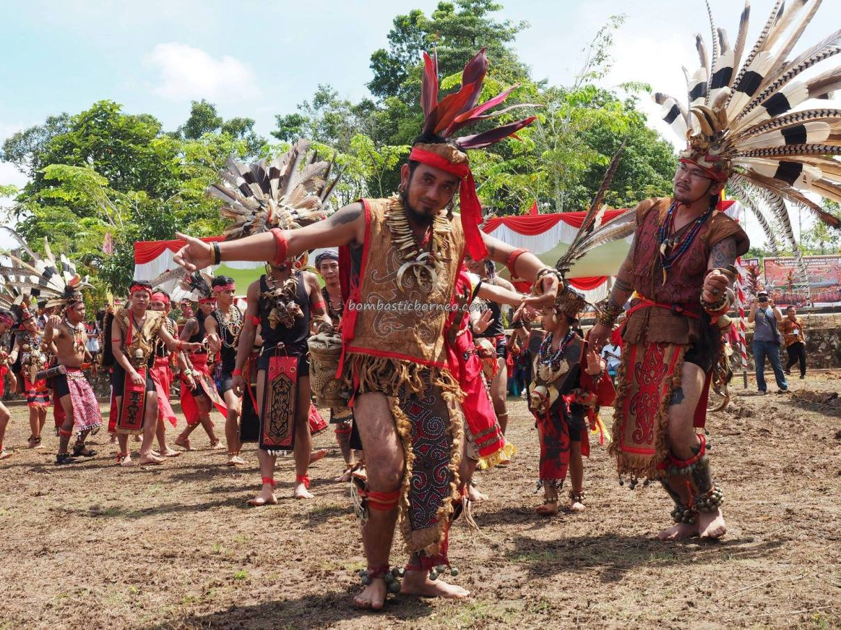 Gawai Dayak Sanggau, paddy harvest festival, indigenous, traditional, backpackers, culture, Borneo, Indonesia, Kalimantan Barat, native, tribe, wisata budaya, Tourism, travel guide, cross border,
