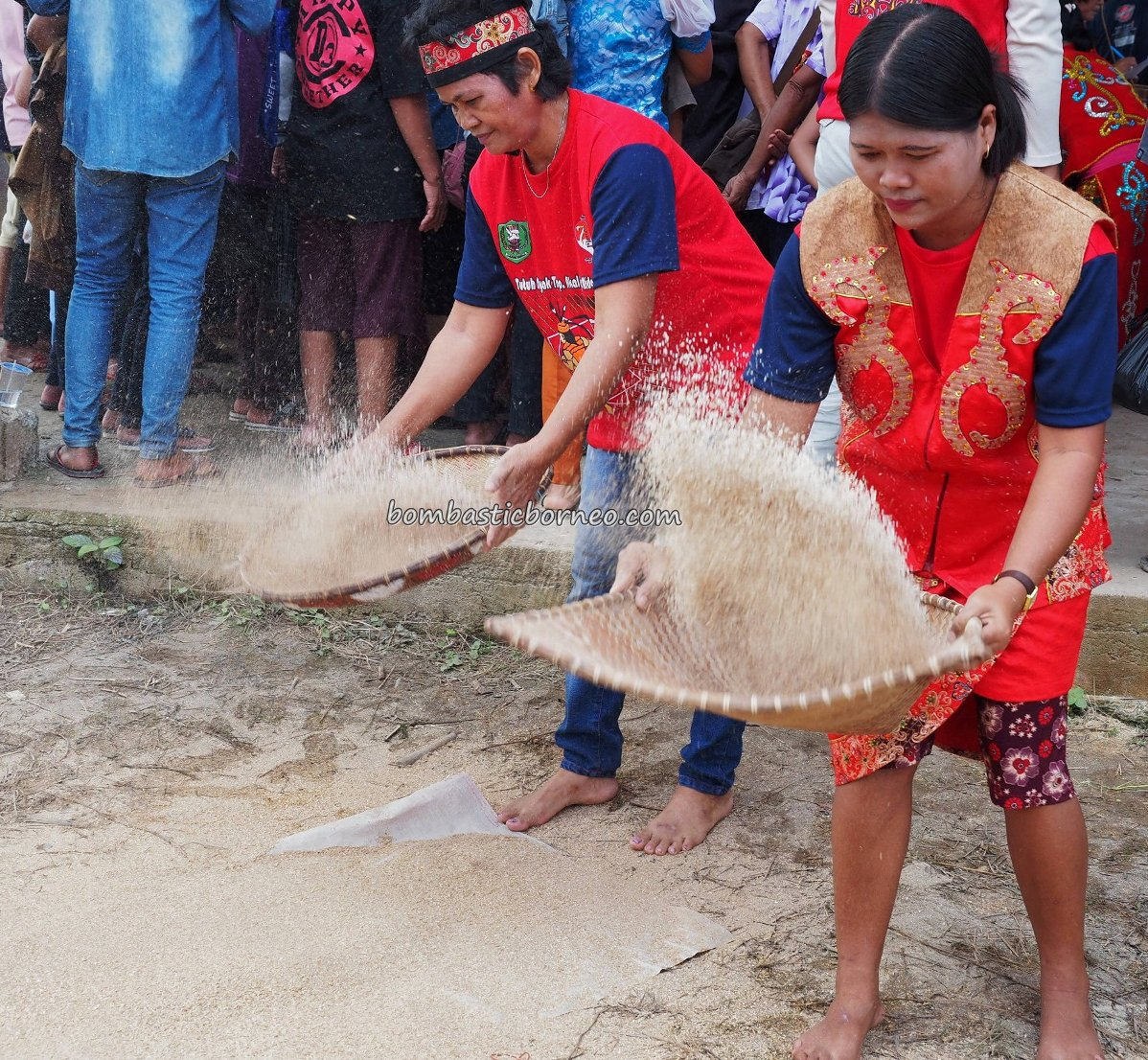 Sanggau, paddy harvest festival, thanksgiving, traditional, backpackers, event, culture, Indonesia, native, tribal, budaya, Tourism, travel guide, 婆罗洲印尼西加里曼丹, 传统土著丰收节日