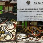 Rehabilitation Center, Rumah Betang Kobus, Dayak motif, indigenous, backpackers, destination, Borneo, Indonesia, Obyek wisata, Tourism, tourist attraction, travel guide, cross border, 婆罗洲旅游景点, 印尼西加里曼丹