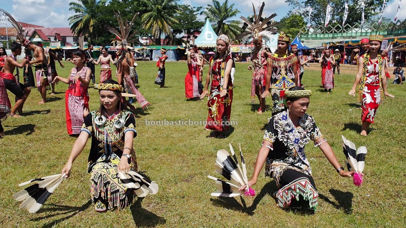Paddy harvest festival, budaya, Indonesia, Kalimantan Barat, Putussibau, indigenous, native, tribal, Obyek wisata, Tourism, travel guide, Trans Border, 探索婆罗洲文化, 印尼西加里曼丹, 达雅克丰收节日