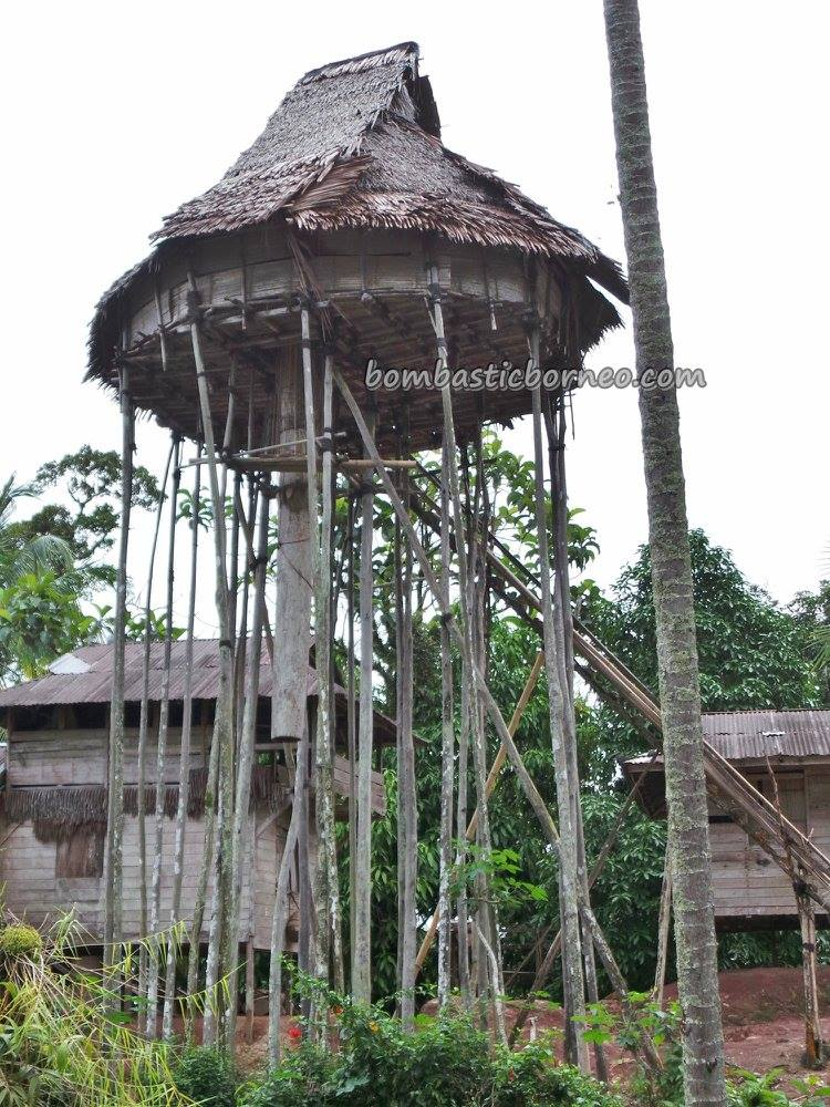 adventure, village, backpackers, Kalimantan Barat, Culture, Dayak Bidayuh, native, tribal, Obyek wisata, Tourism, travel guide, Cross Border, Borneo, 探索婆罗洲游踪, 印尼西加里曼丹, 原住民比达友部落