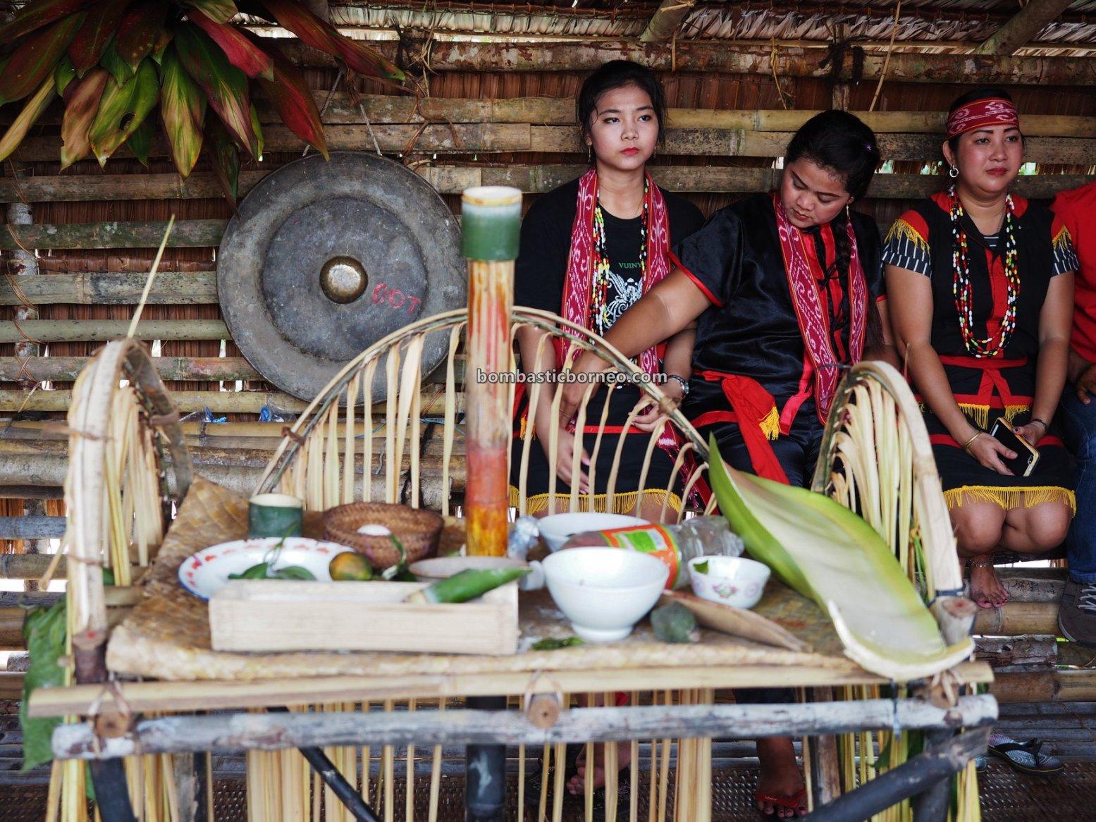 Harvest Festival, traditional, ritual, ceremony, Indonesia, native, tribe, tribal, tourism, tourist attraction, travel guide, Cross Border, Borneo, 印尼西加里曼丹, 原住民传统丰收节. 婆罗洲比达友部落