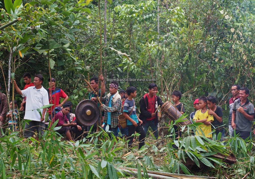 Paddy Harvest Festival, adventure, authentic, traditional, village, budaya, Kalimantan Barat, Desa Sahan, Native, Ethnic, wisata budaya, Tourism, travel guide, Trans Borneo, 探索婆罗洲游踪