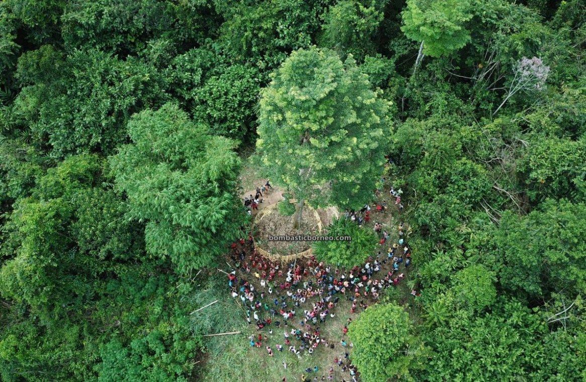 Paddy Harvest Festival, adventure, traditional, village, destination, Indonesia, West Kalimantan, Desa Sahan, Native, event, Tourism, tourist attraction, cross border, Borneo, 印尼西加里曼丹, 婆罗洲达雅丰收节