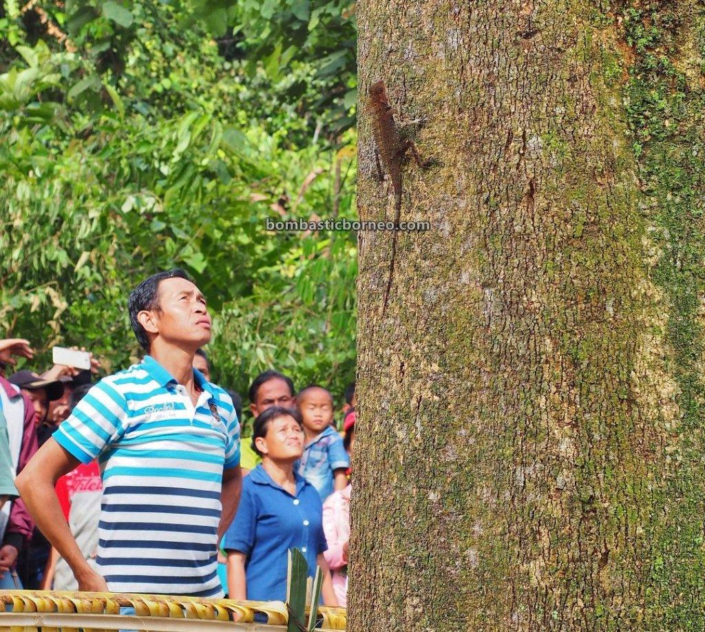 Gawai Harvest Festival, authentic, village, Indonesia, Bengkayang, Dayak Bidayuh, Native, Ethnic, event, wisata budaya, Tourism, travel guide, Borneo