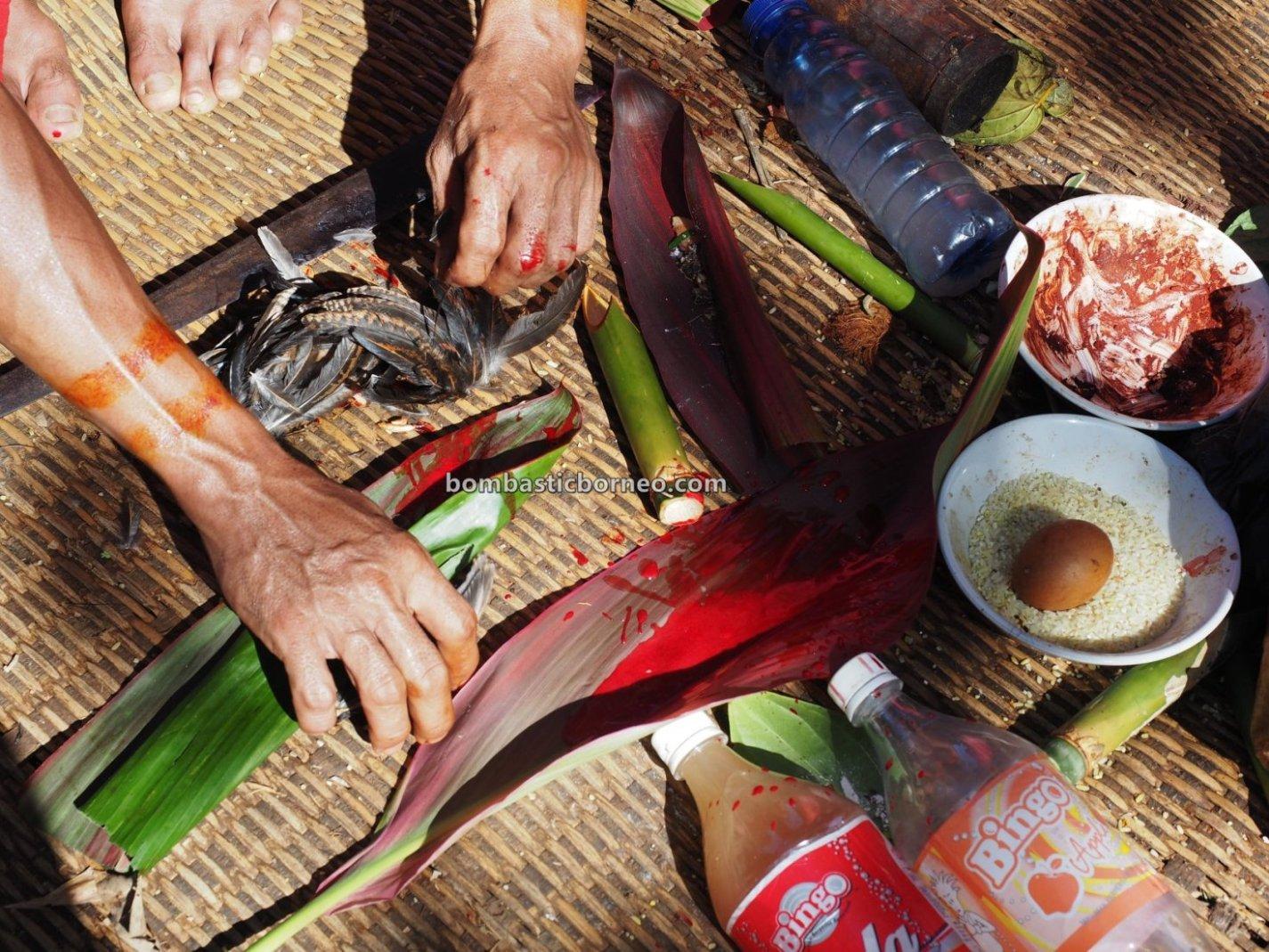Nyobeng Rambai, authentic, village, destination, Indonesia, Bengkayang, Desa Sahan, Native, tribal, ritual, Obyek wisata, Tourism, trans border, 婆罗洲西加里曼丹, 孟加映比达友族部落, 印尼土著传统文化