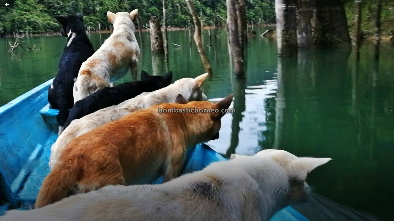 Bakun Dam, empangan, destination, traditional, memburu, dog hunting, Belaga, Kapit, Sarawak, native, Orang Ulu, Tourism, tourist attraction, travel guide, Borneo,