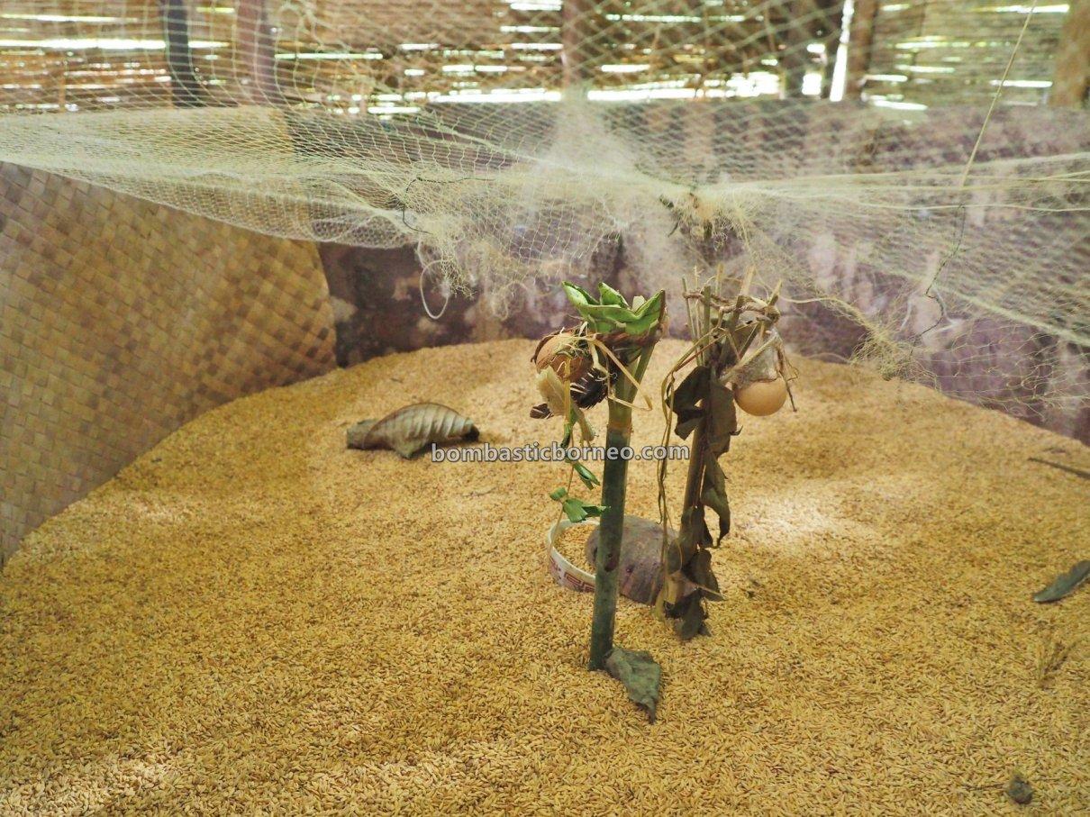 Nyobeng, Paddy Harvest Festival, traditional, Culture, ritual, Indonesia, West Kalimantan, Desa Bengkawan, Dayak Kowon't, native, tribal, Tourism, tourist attraction, 婆羅洲土著部落, 西加里曼丹比达友文化, 孟加映原住民丰收节,