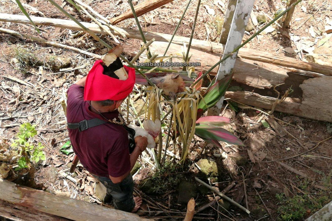 Gawai Padi, Paddy Harvest Festival, traditional, backpackers, culture, ritual, Bengkayang, Dayak Kowon't, native, tribal, obyek wisata, travel guide, Cross Border, 婆罗洲西加里曼丹, 孟加映比达友族部落, 印尼土著传统文化