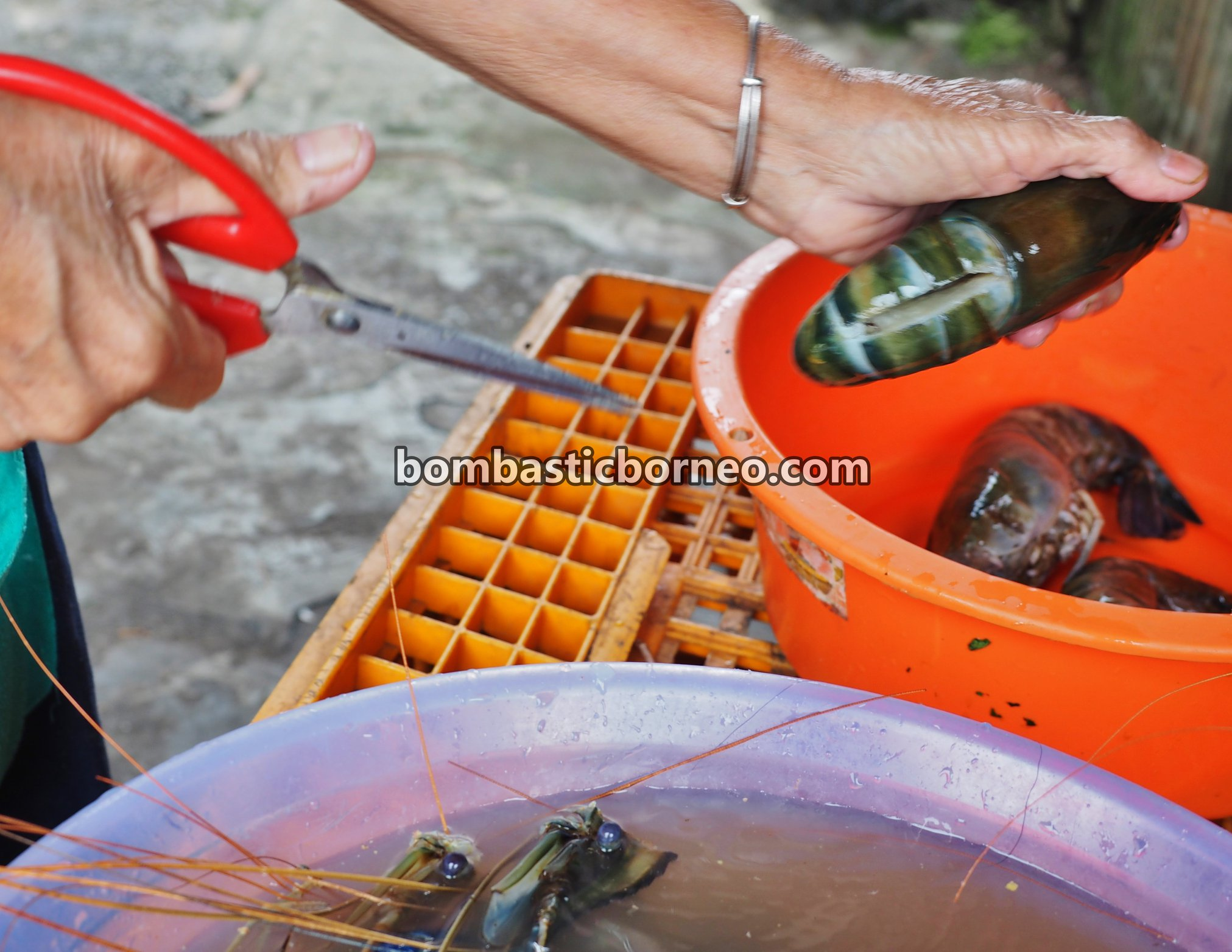 udang galah, freshwater prawn, Giant Prawn, backpackers, destination, Jit Hin, Malaysia, Sarawak, Borneo, Tourism, travel guide, village, 马来西亚砂拉越, 西连甘榜达迈, 蓝脚淡水虾