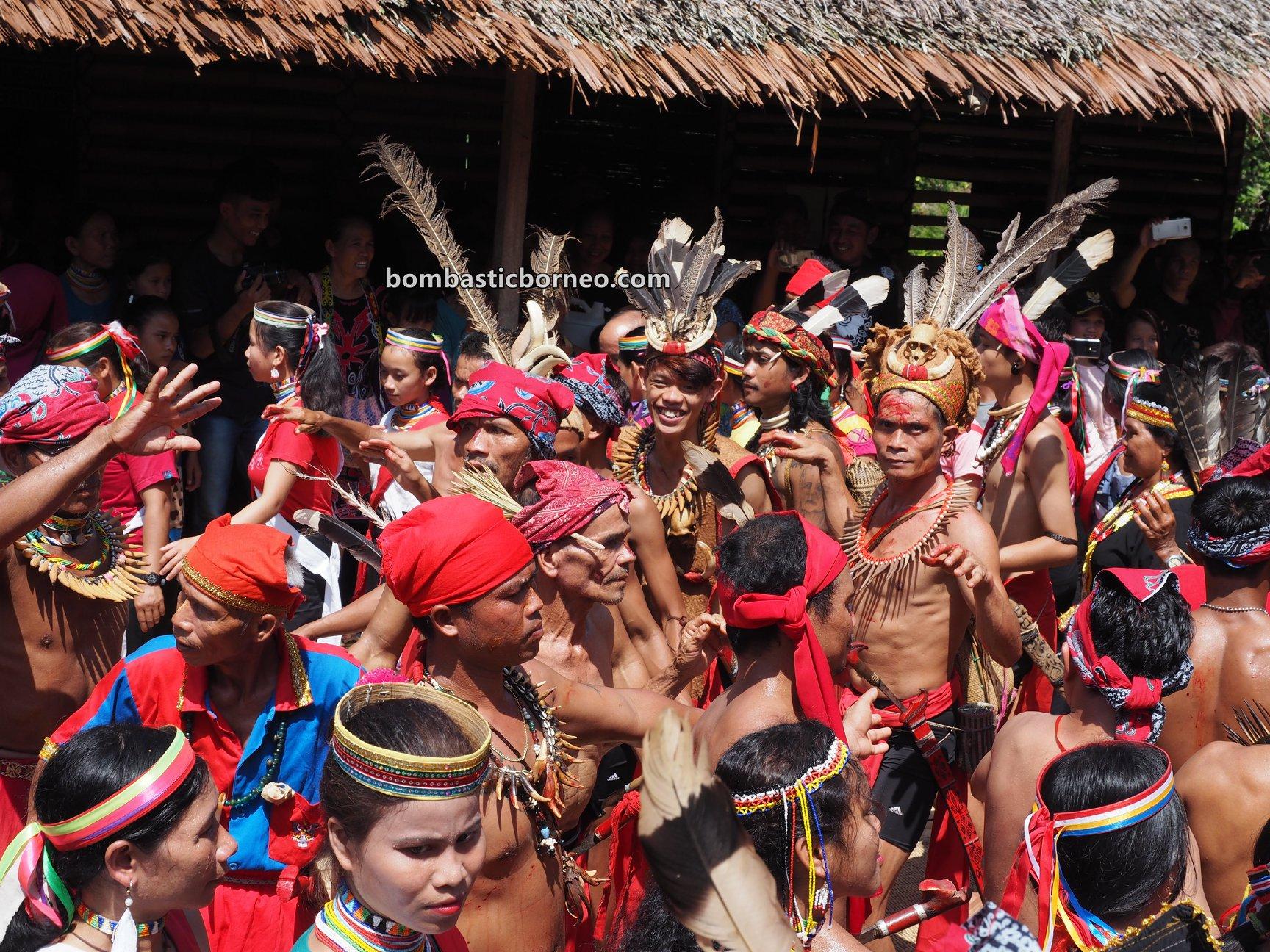 Gawai Serumpun, harvest festival, Sungkung Medeng, authentic, indigenous, culture, Bengkayang, Indonesia, West Kalimantan, Dayak Bidayuh, native, tribal, tourist attraction, travel guide, Trans Border, Borneo