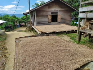 authentic, backpackers, Bengkayang, Indonesia, Kalimantan Barat, Siding, tribe, white pepper, tourism, tourist attraction, travel guide. Trans Borneo, 婆罗洲原住民部落, 印尼西加里曼丹, 孟加映宋宫部落
