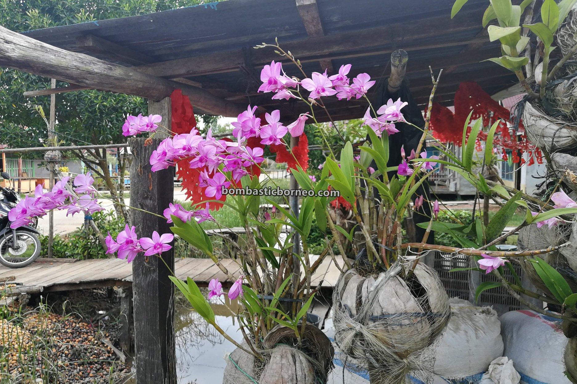 nature, Malay fishing village, Gaya Baru, Tourism, travel guide, Parit Baru, Borneo, 印尼西加里曼丹, 三发文岛宜马来渔村