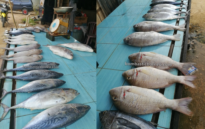 backpackers, fish market, Malay fishing village, Kampung Nelayan Melayu,, Indonesia, Obyek wisata, Tourism, tourist attraction, travel guide, Borneo, Cross Border, 探索婆罗洲游踪, 印尼西加里曼丹, 三发邦戛马来渔村