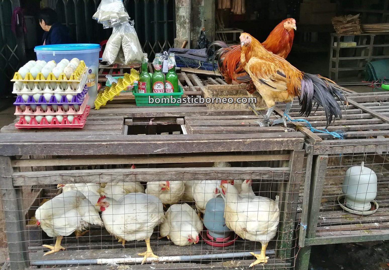 Morning Market, authentic, traditional, destination, Indonesia, West Kalimantan, Kota Amoi, fish, Obyek wisata, Tourism, Borneo, 探索婆罗洲游踪, 印尼西加里曼丹, 山口洋早市