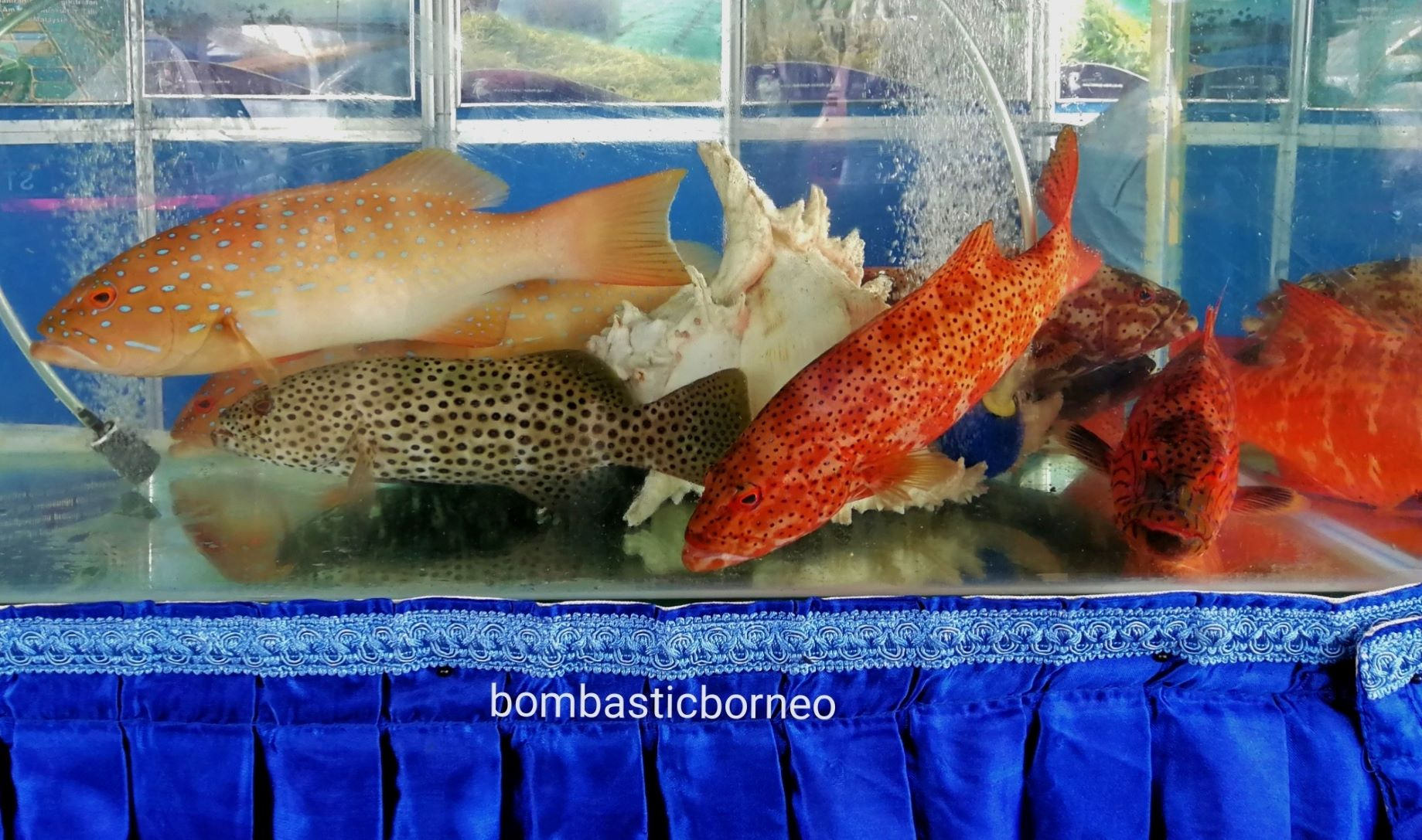 Makanan laut, seafood. backpackers, destination, Semporna, Tawau, Sabah, Malaysia, Tourism, tourist attraction, travel guide, Trans Borneo,