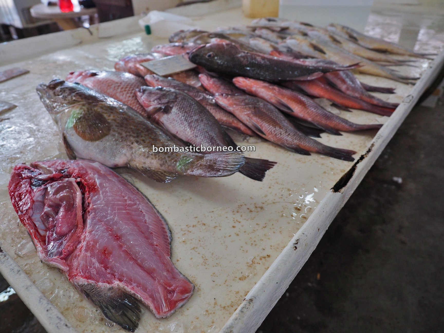 Pasar Sin On, local market, backpackers, destination, fish, seafood, lobster, makanan laut, Borneo, Malaysia, Sabah, Tawau, Tourism, tourist attraction, travel guide,