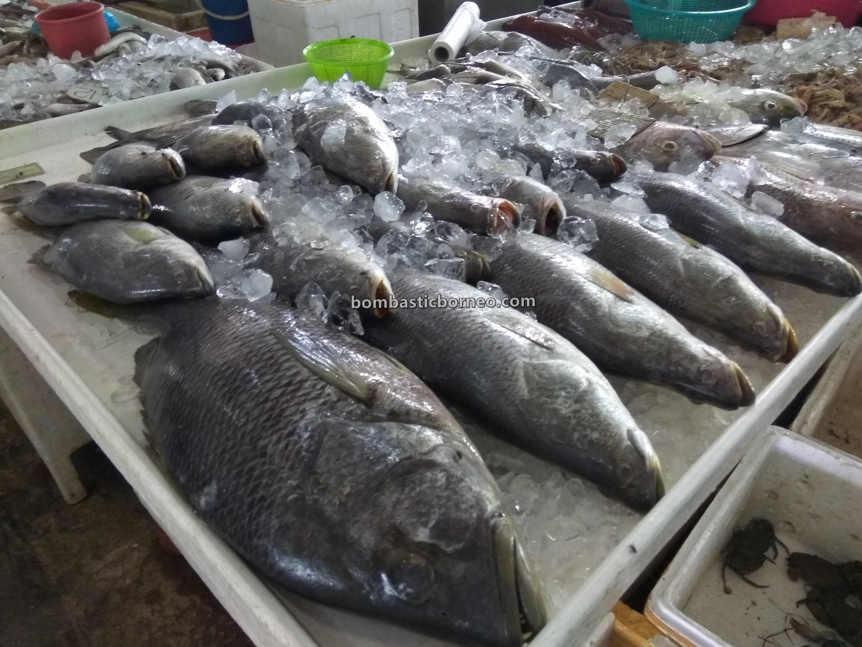 local market, traditional, backpackers, destination, exploration, fish, seafood, Borneo, Malaysia, Tourism, tourist attraction, travel guide, 跨境婆罗洲沙巴, 新安综合巴刹, 斗湖海鲜早市场,