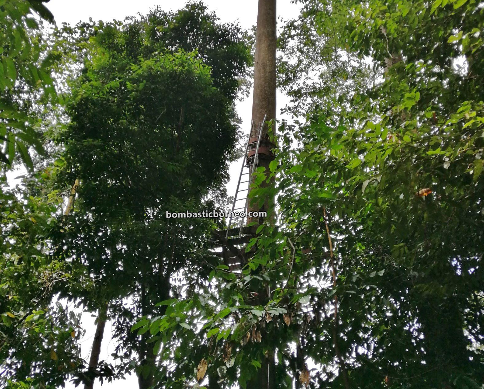 Pusat Sejadi Bukit Gemok, Gemok Hill Forest Reserve, adventure, nature, outdoor, jungle trekking, conservation, canopy bridge, Jambatan gantung, Titian Silara, Malaysia, Sabah, Tawau, Tourism, Borneo,