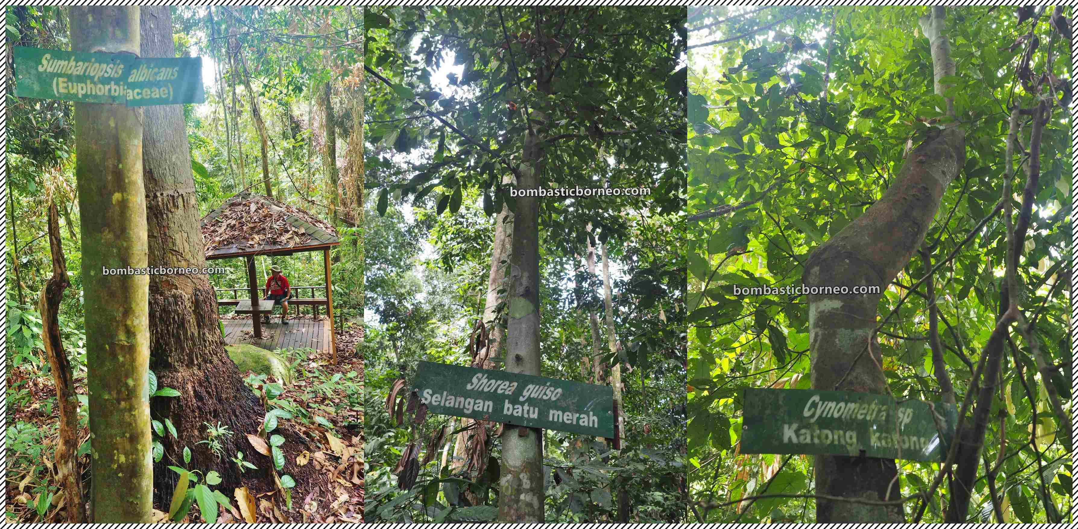 Pusat Sejadi Bukit Gemok, Gemok Hill Forest Reserve, adventure, nature, jungle trekking, hiking, exploration, destination, Hutan simpan, Tawau, tourism, Sabah, Tourist attraction, travel guide, Trans Borneo,
