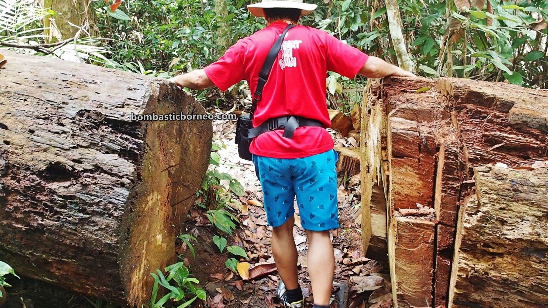 Pusat Sejadi Bukit Gemok, Gemok Hill Forest Reserve, hiking, exploration, conservation, backpackers, Hutan simpan, Malaysia, Tourism, tourist attraction, travel guide, Trans Borneo, 跨境婆罗洲游踪,马来西亚沙巴, 斗湖森林保护区,