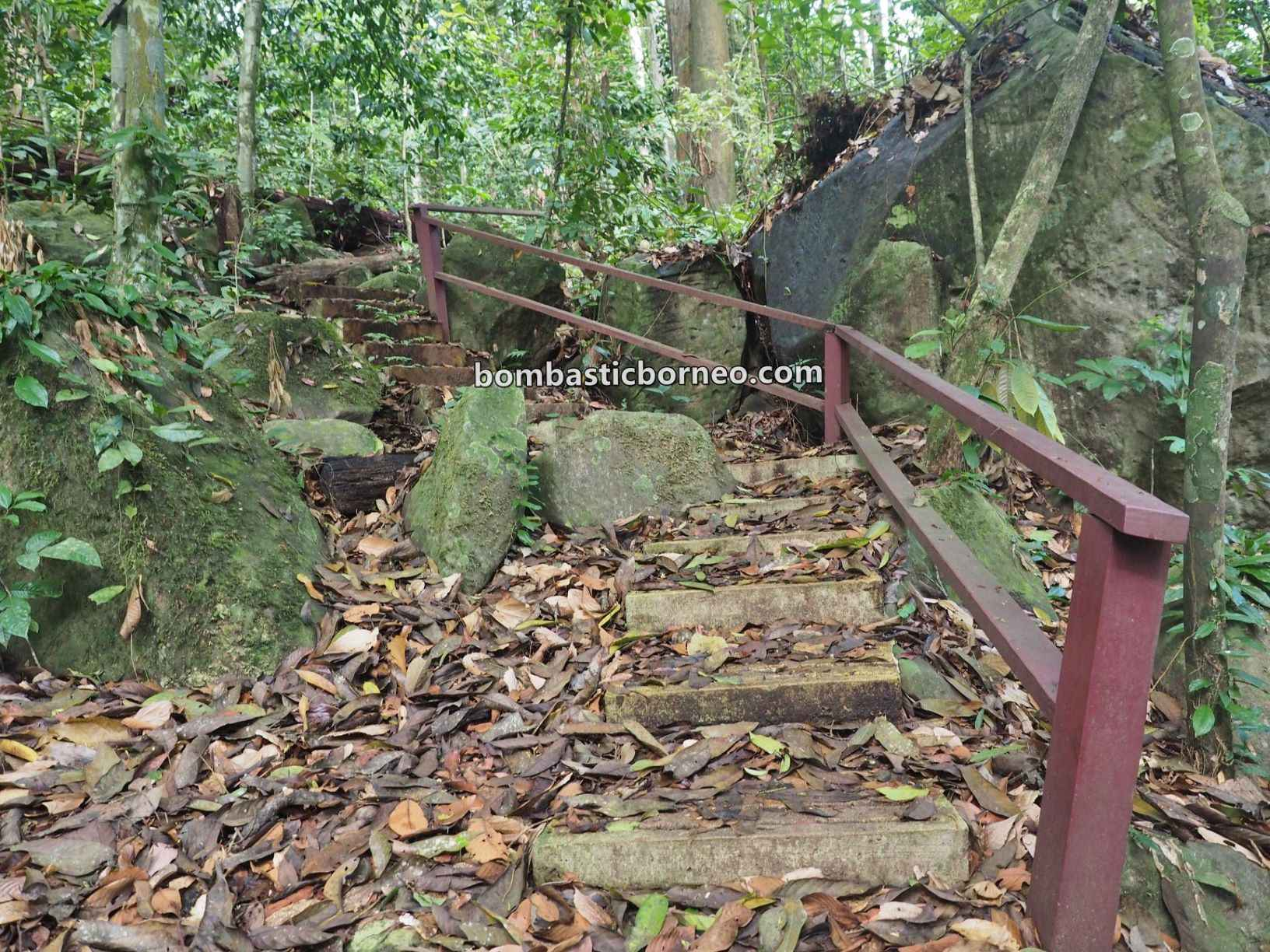 Pusat Sejadi Bukit Gemok, Gemok Hill Forest Reserve, hiking, exploration, canopy bridge, destination, Hutan simpan, Malaysia, Tourism, rainforest, travel guide, Borneo, 探索婆罗洲游踪, 斗湖旅游景点, 沙巴森林保护区
