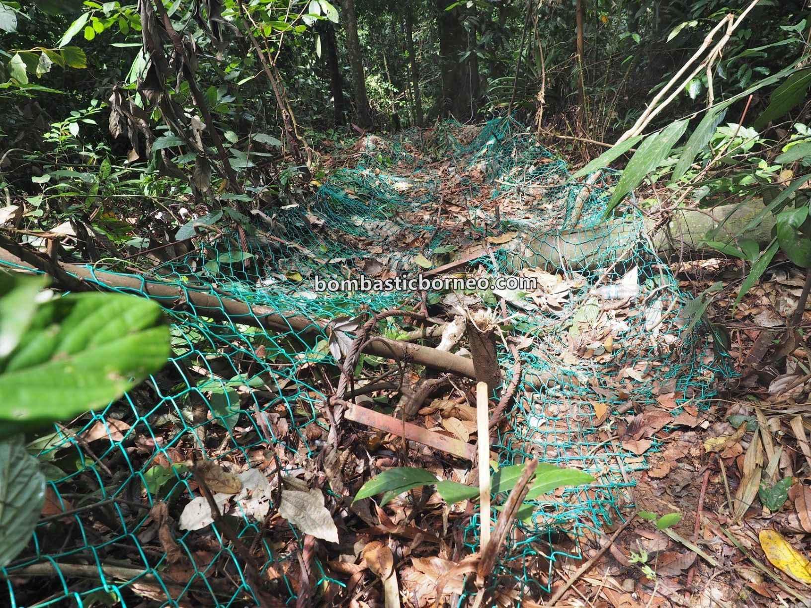 Gemok Hill Forest Reserve, adventure, nature, outdoor, exploration, Hutan simpan, Jambatan gantung, Titian Silara, Malaysia, Sabah, Tourism, Trans Borneo, 穿越婆罗洲游踪,马来西亚沙巴, 斗湖森林保护区,