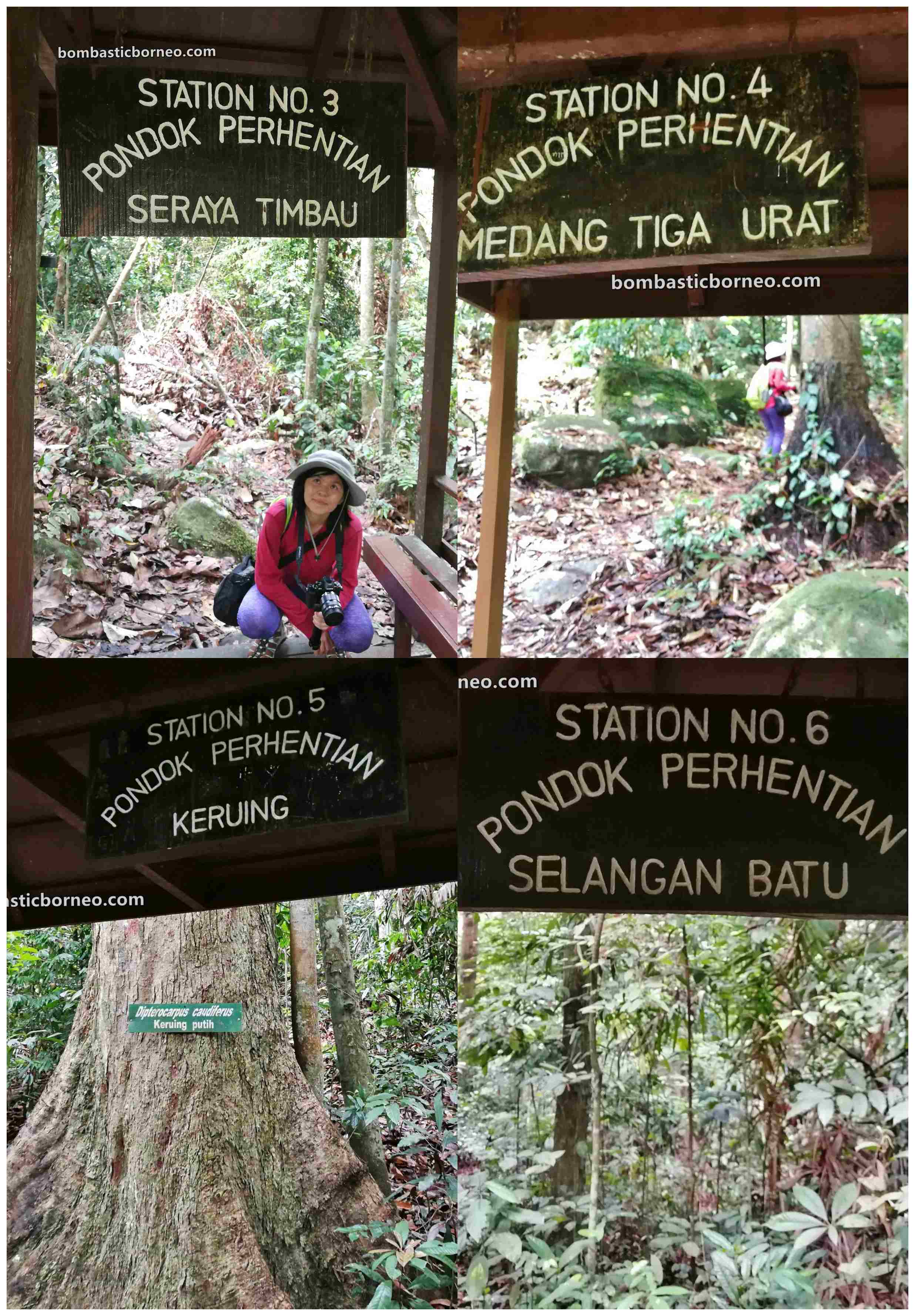 adventure, nature, outdoor, primary jungle, trekking, conservation, Hutan simpan, Titian Silara, Malaysia, tourist attraction, travel guide, Trans Borneo, 婆罗洲游踪,马来西亚沙巴, 斗湖森林保护区