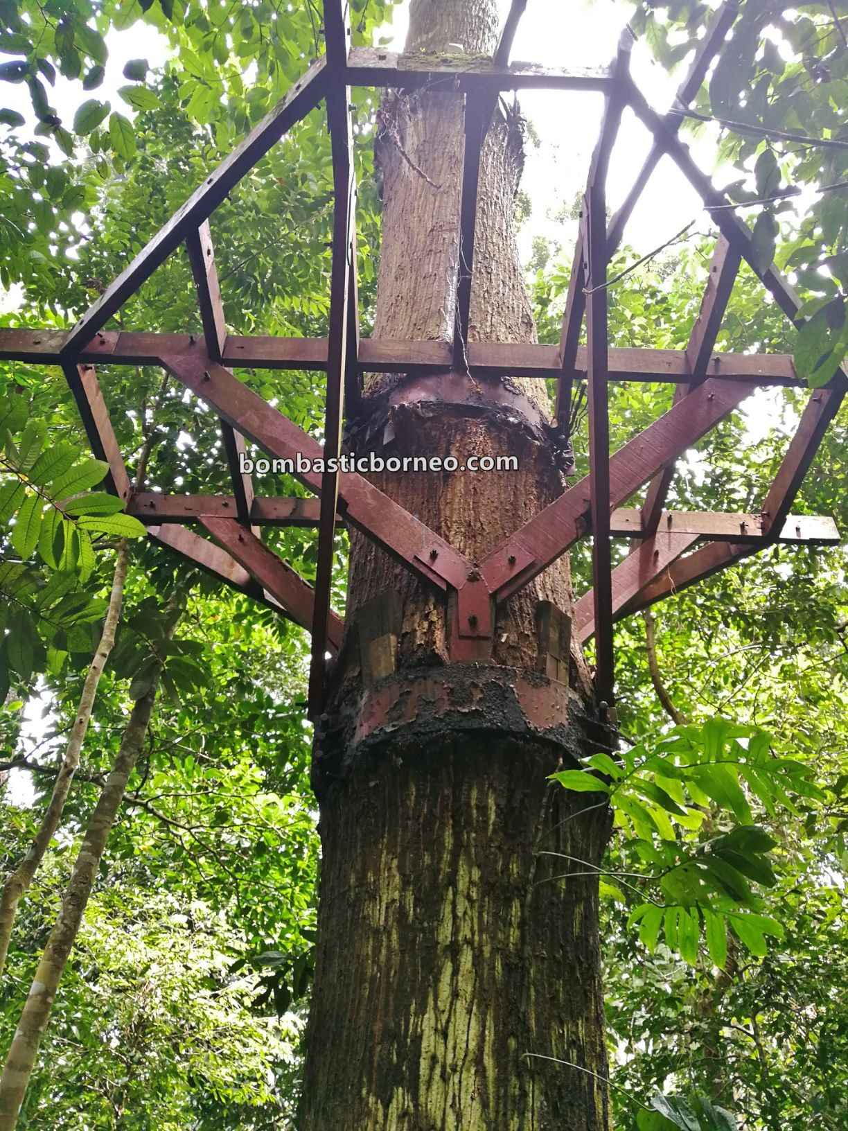 Gemok Hill Forest Reserve, adventure, nature, outdoor, jungle trekking, Hutan simpan, canopy bridge, Malaysia, Sabah, Tourism, tourist attraction, Trans Borneo, 马来西亚沙巴, 斗湖旅游景点, 森林保护区吊桥,
