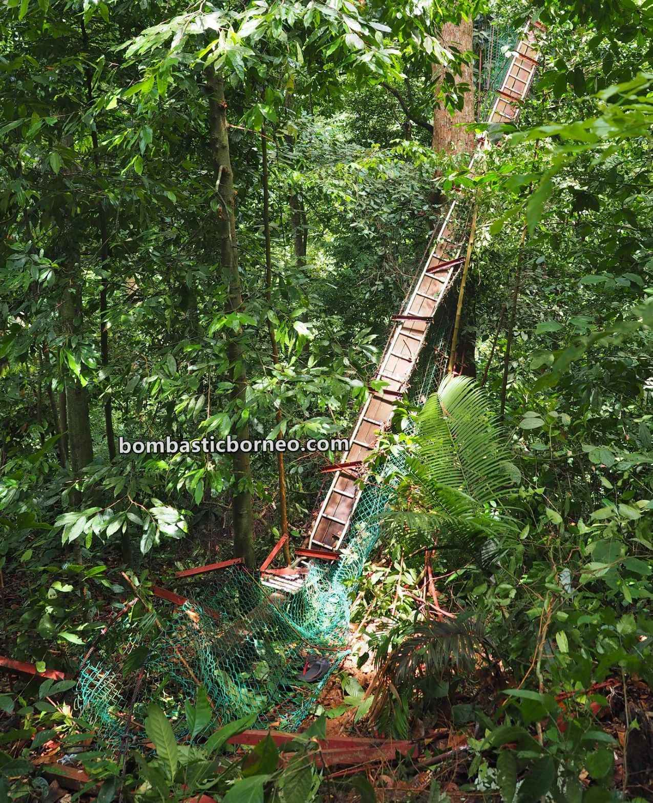 Pusat Sejadi Bukit Gemok, rainforest, adventure, nature, outdoor, jungle trekking, conservation, Jambatan gantung, Titian Silara, Malaysia, travel guide, Trans Borneo, 穿越婆罗洲游踪, 沙巴斗湖旅游景点, 森林保护区吊桥,