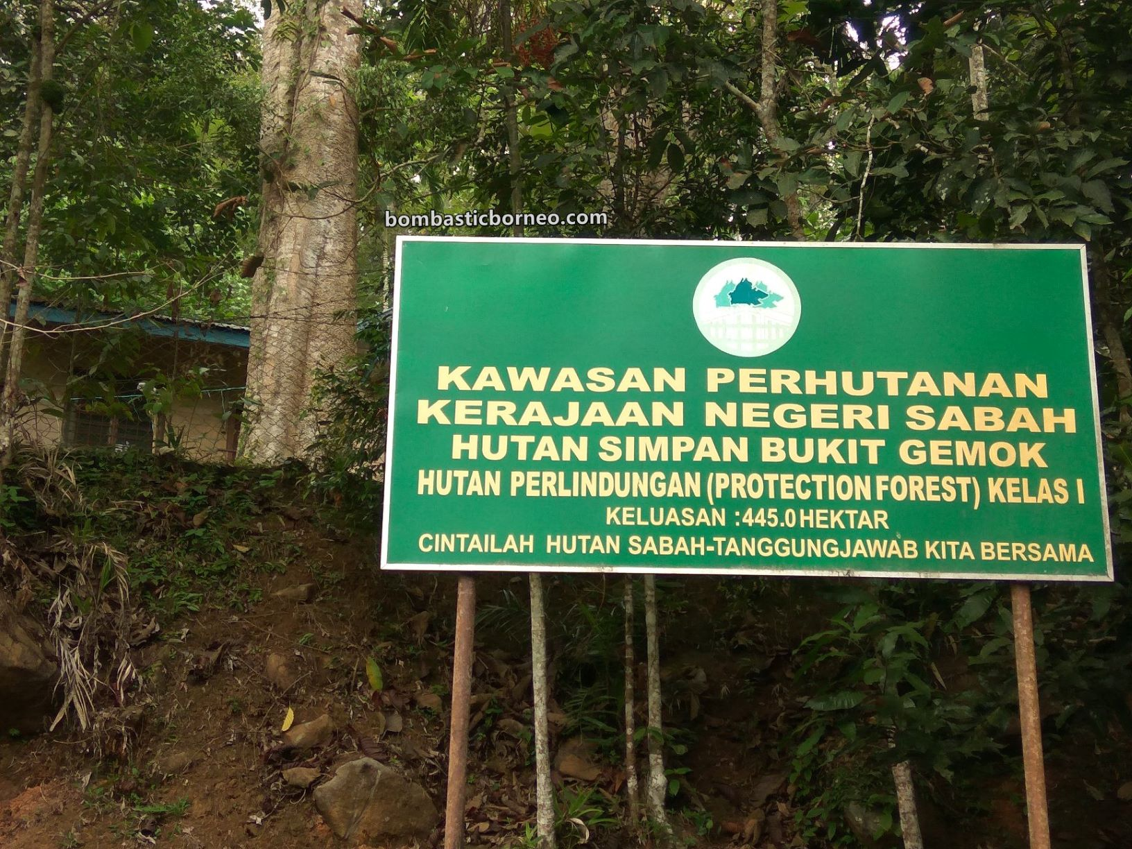 Gemok Hill Forest Reserve, rainforest, nature, primary jungle, hiking, conservation, destination, Malaysia, Sabah, Tourism, travel guide, Trans Borneo, 马来西亚沙巴, 斗湖森林保护区,