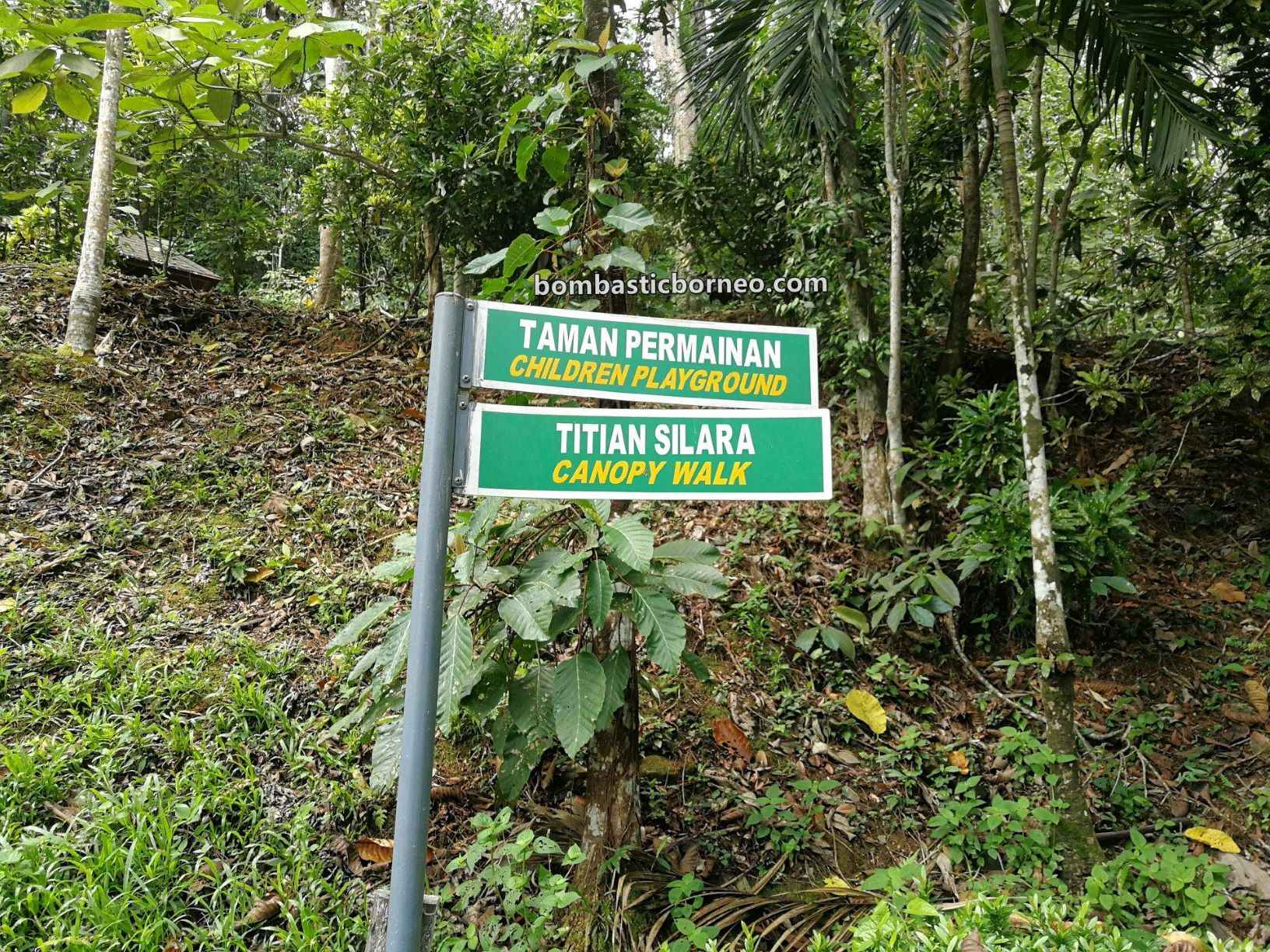 Gemok Hill Forest Reserve, adventure, nature, outdoor, jungle trekking, conservation, backpackers, Hutan simpan, Titian Silara, Malaysia, tourist attraction, travel guide, Trans Borneo, 婆罗洲斗湖, 沙巴森林保护区