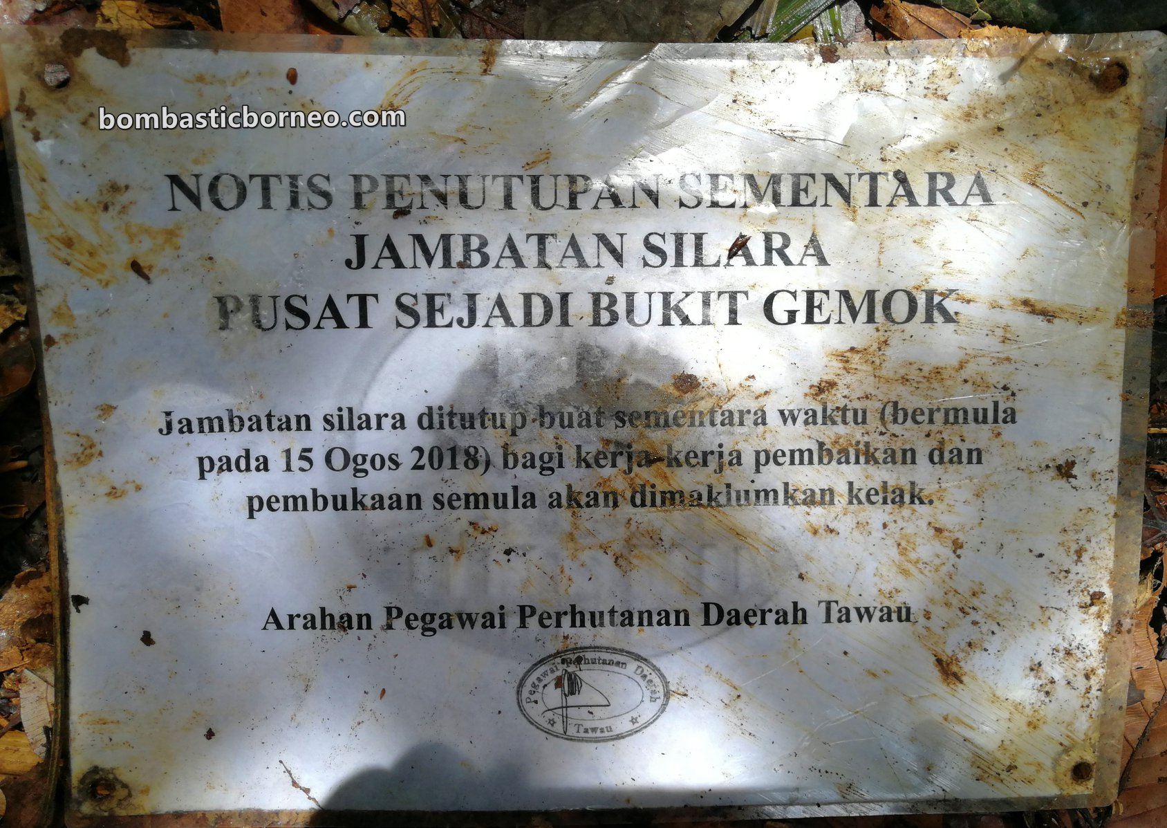 Gemok Hill Forest Reserve, jungle trekking, hiking, conservation, exploration, Hutan simpan, canopy bridge, Malaysia, Sabah, Tourism, travel guide, Borneo,