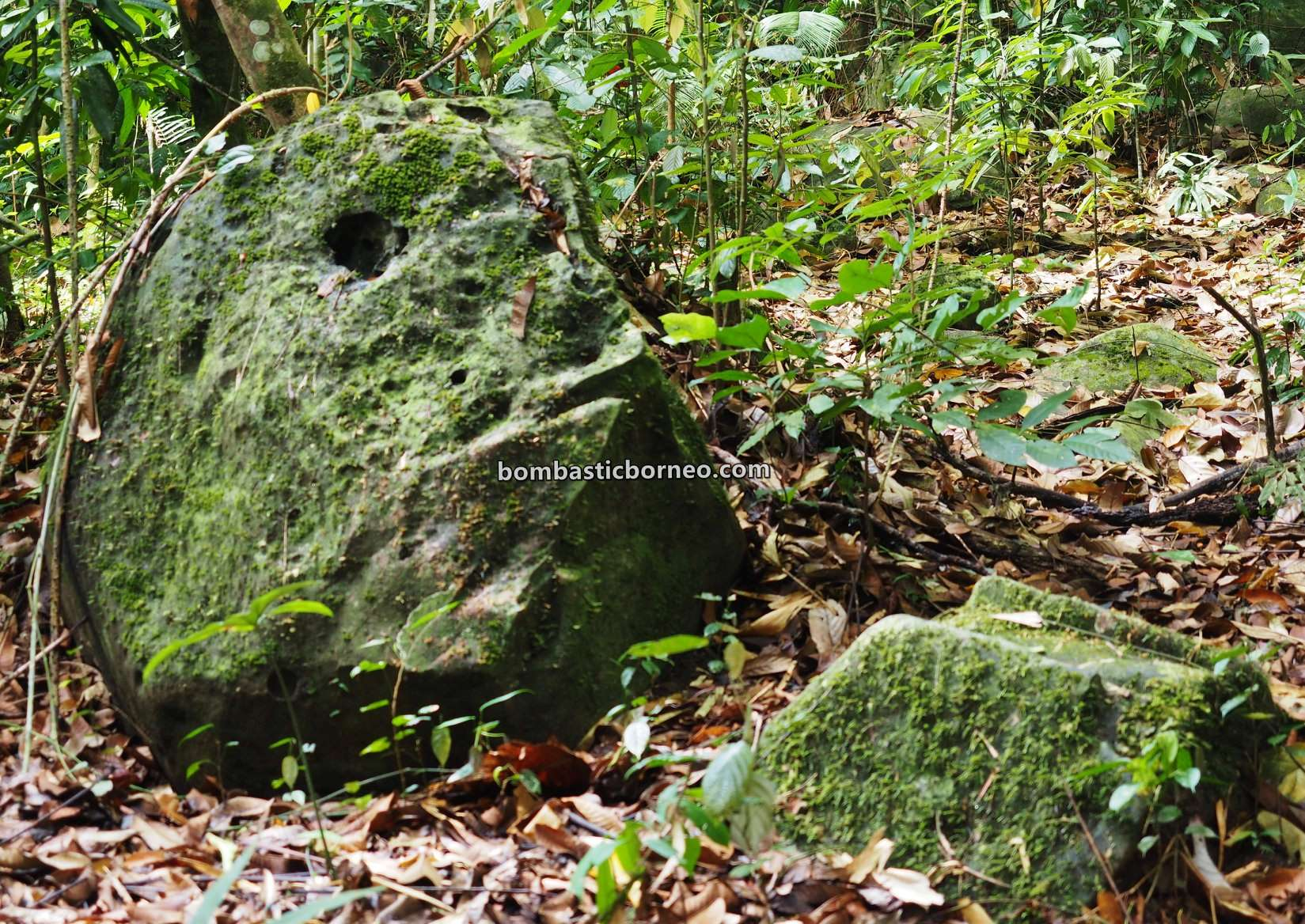 Pusat Sejadi Bukit Gemok, rainforest, adventure, nature, conservation, exploration, backpackers, destination, Malaysia, Tourism, tourist attraction, Trans Borneo, 跨境婆罗洲游踪, 斗湖旅游景点, 沙巴森林保护区,