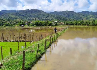 Bakelalan, authentic, traditional, backpackers, destination, paddy fields, Maligan Highlands, Long Langai, Sarawak, Malaysia, Lun Bawang, Tribe, Tourism, Travel Guide, Trans Borneo