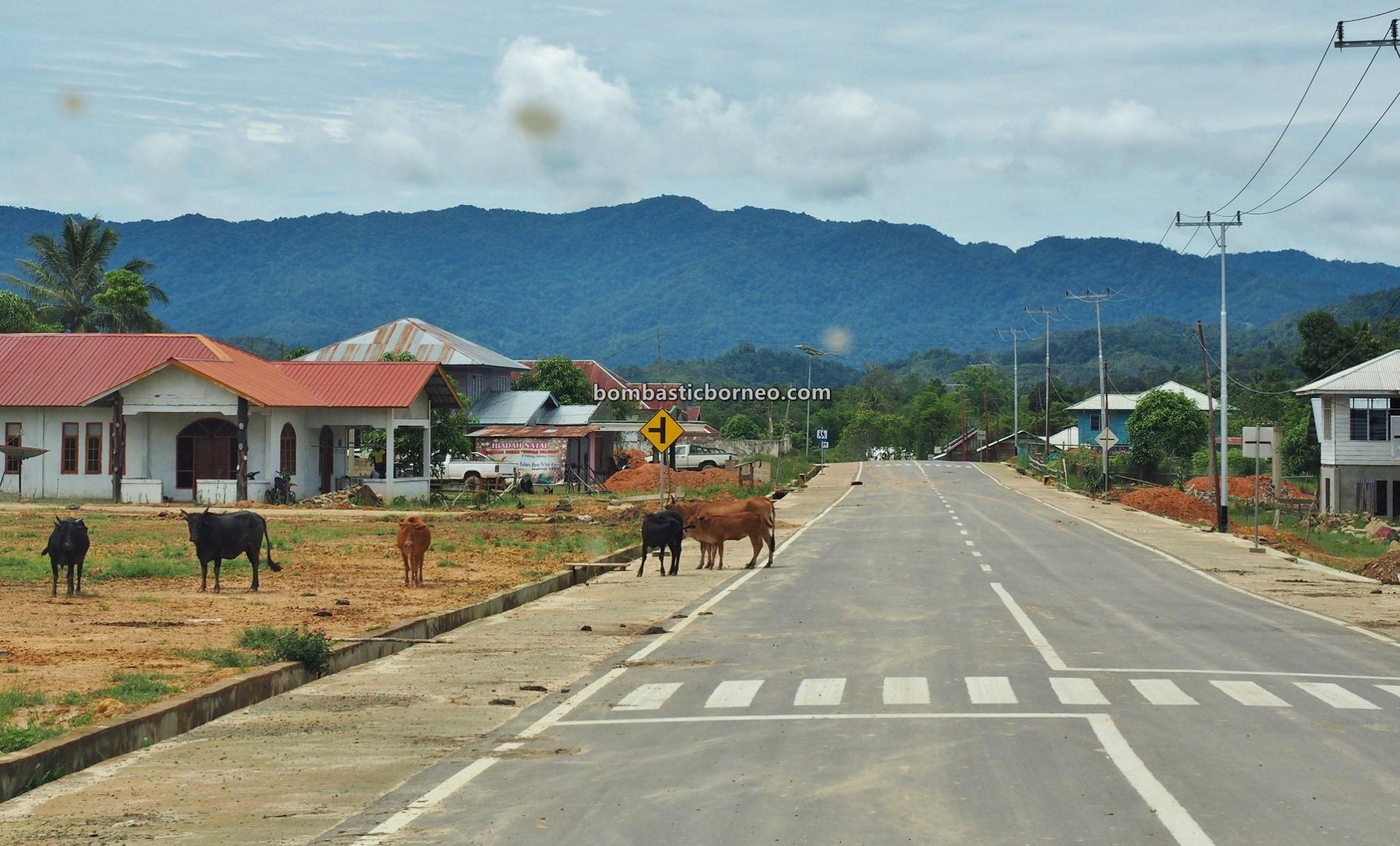 Indonesia, North Kalimantan, Nunukan, Krayan, Long Nawang, adventure, exploration, Highlands, native, Suku Dayak Lundayeh, Tourism, tourist attraction, travel guide, Cross Border, Borneo