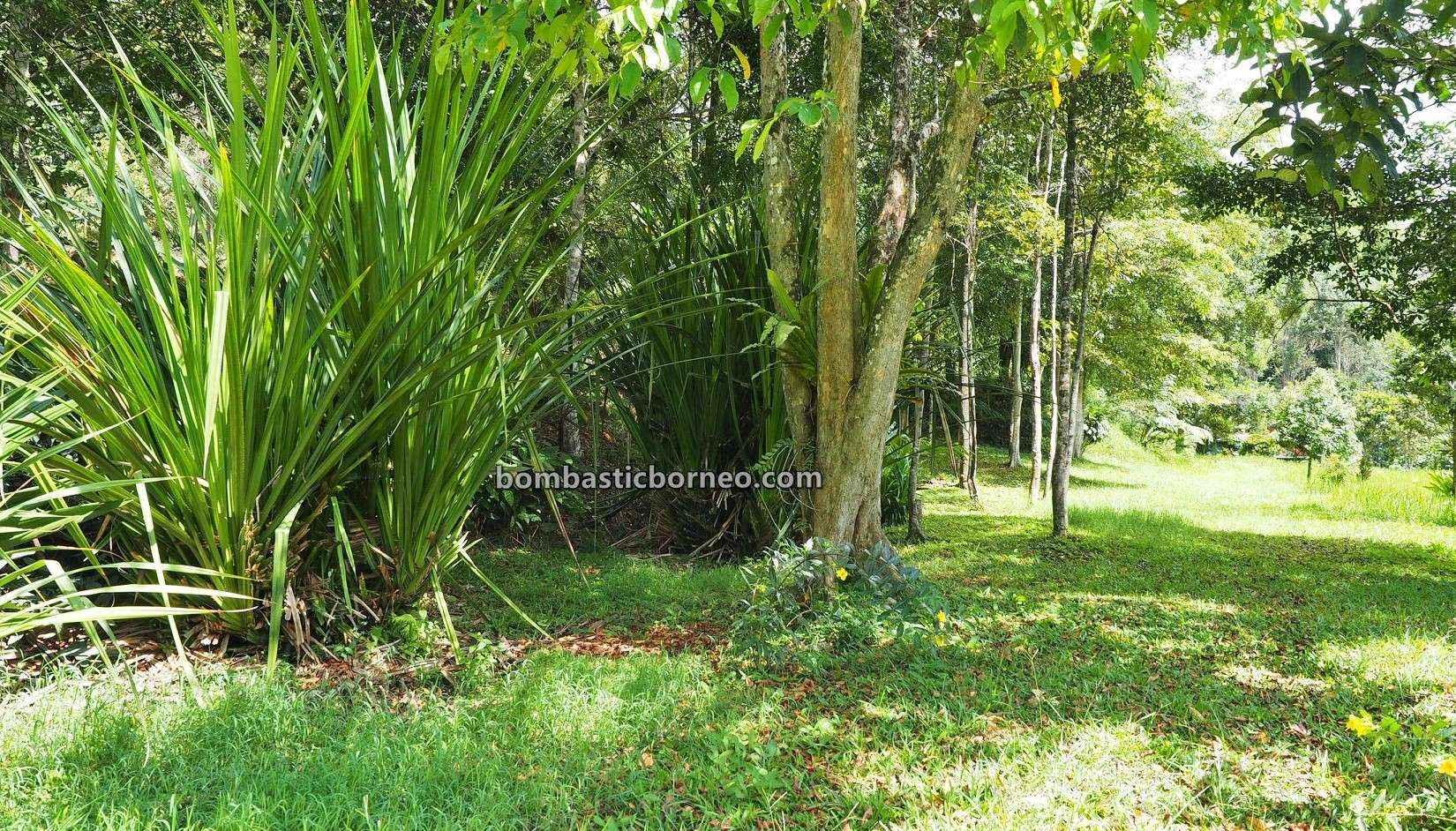 Asang Langai homestay, Botanical Garden, Taman Botani, adventure, nature, outdoor, fruits farms, Herbal Plant, Ba'kelalan, exploration, Highlands, Sarawak, Malaysia, Ecotourism, Trans Borneo,