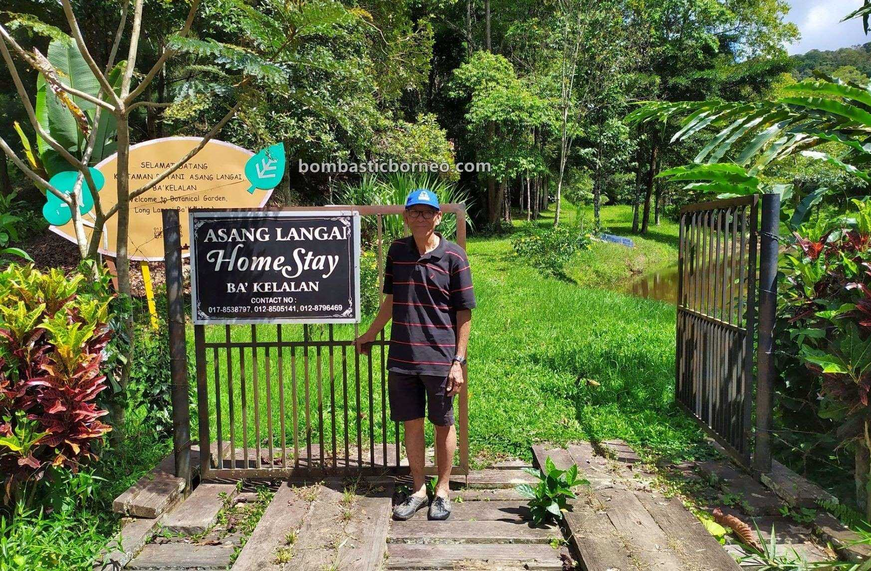 homestay, accommodation, nature, outdoor, Herbal Plant, destination, Malaysia, Lun Bawang, Ecotourism, tourist attraction, Travel Guide, Trans Borneo, 跨境婆罗洲游踪, 马来西亚砂拉越, 巴卡拉兰高原民宿,